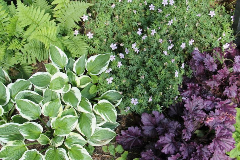 Bladväxter förgyller rabatten länge