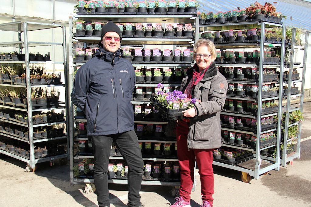 Ännu en tidig vår för svenska perenner, leveranser med härdiga perenner har gått till Mellansverige och så långt upp som till Sundsvall!