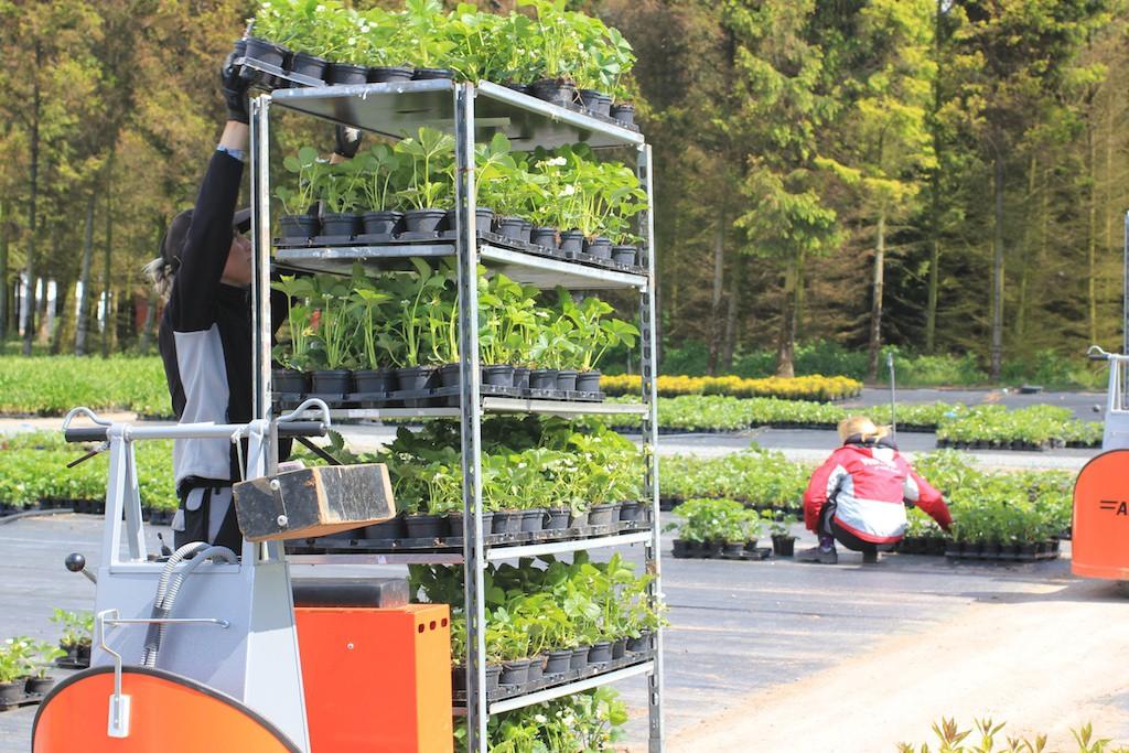 När order ska packas plockas först etiketter och sedan hämtas alla växter in på CC-vagn med våra miljövänliga truckar. Så lätta att köra att alla kan använda dem.