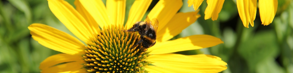 pollinerare sidhuvud