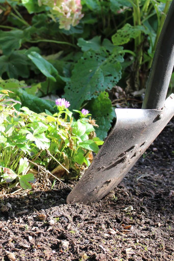 Spaden i jorden och prova perenner i miljö ger oss mycket kunskap.